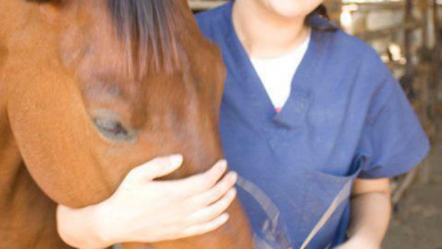 Importance Of Equine Dentistry