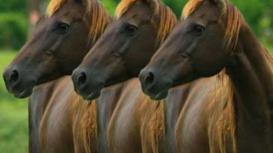 Clone Horses